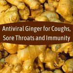 Antiviral Ginger for Coughs, Sore Throats and Boosting Immunity